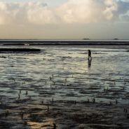 IDFA: Silence of the tides