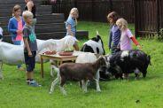 Kinderboerderij Goudse Hofsteden